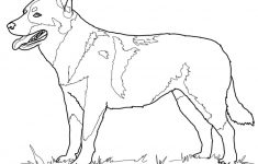 Australian Cattle Dog Coloring Page   Free Printable Coloring Pages   Free Printable Dog Puzzle
