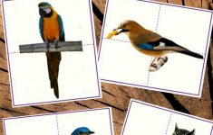 Diy Bird Puzzles For Toddlers And Preschoolers With Real Photos   Printable Bird Puzzles