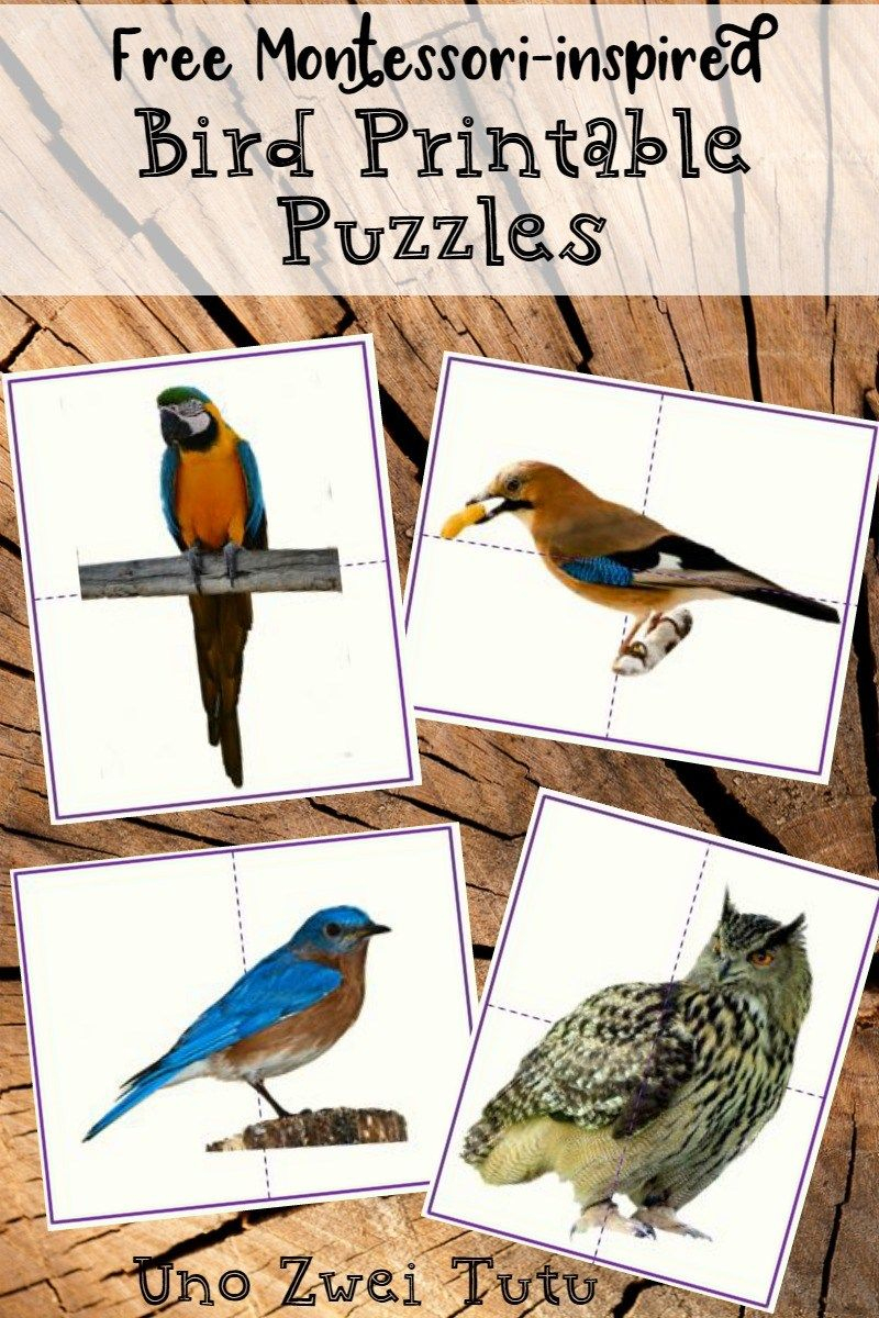 Diy Bird Puzzles For Toddlers And Preschoolers With Real Photos - Printable Bird Puzzles