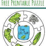 Frog Life Cycle Printable Puzzle   Views From A Step Stool   Printable Toddler Puzzles