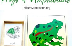 Montessori Resources For Learning About Frogs And Amphibians   Printable Frog Puzzle