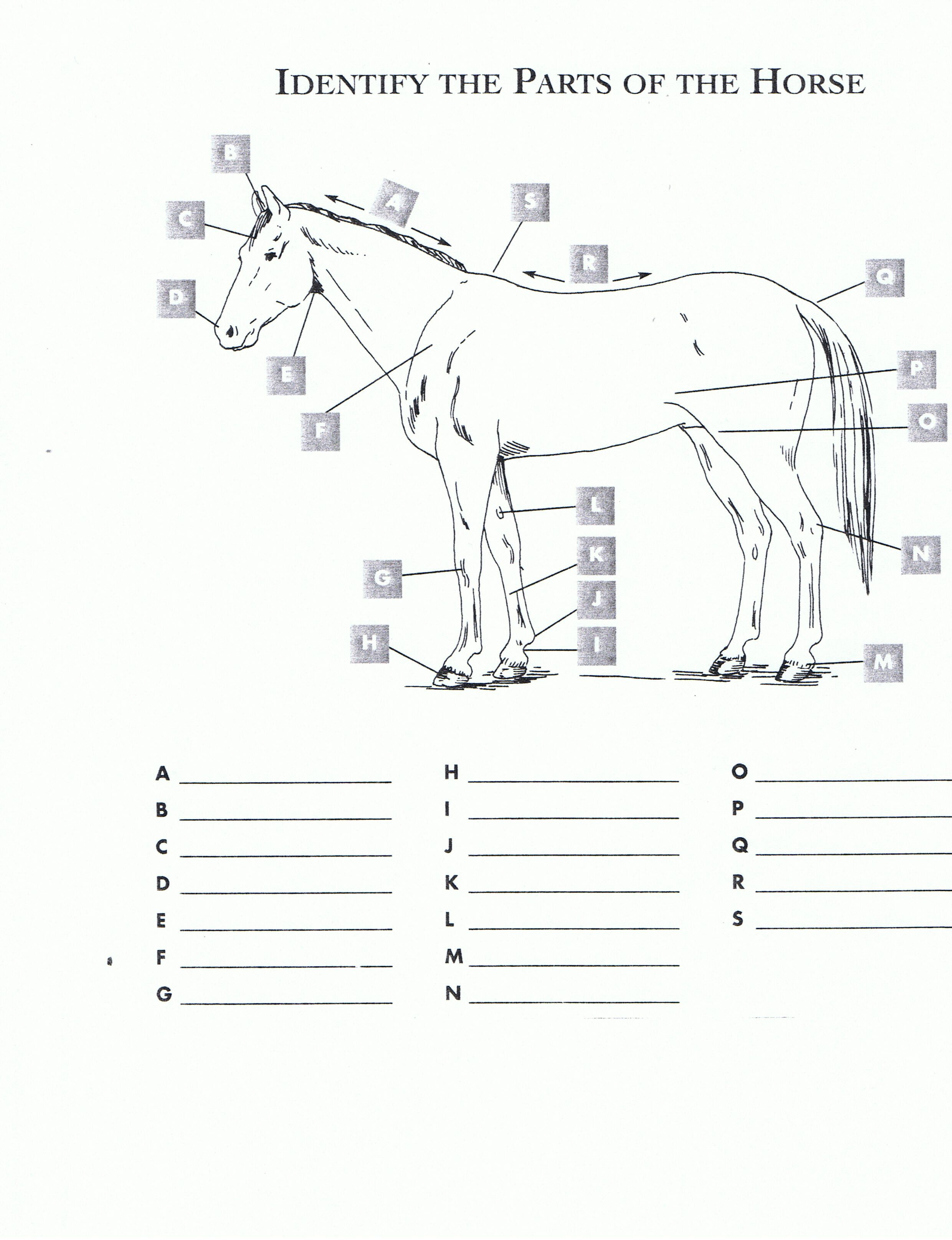 Pincindy Dillingham On Homeschool Highschool   Horses, Horseback - Printable Horse Puzzle