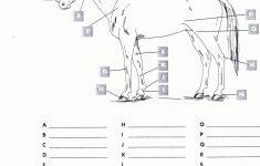 Pincindy Dillingham On Homeschool Highschool | Horses, Horseback   Printable Horse Puzzles