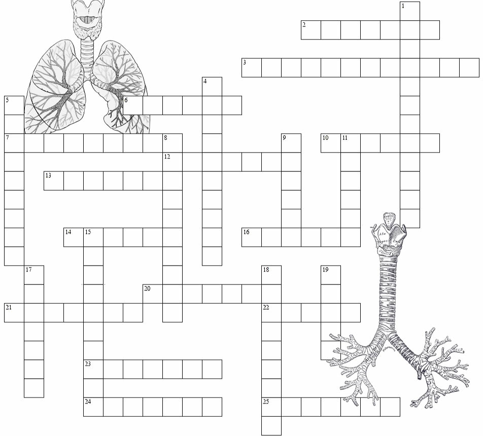 Respiratory System - Crossword Puzzle - Respiratory System Crossword Puzzle Printable