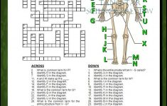 Skeletal System Crossword With Diagram {Editable}   Tpt Science   Printable Skeletal System Crossword Puzzle