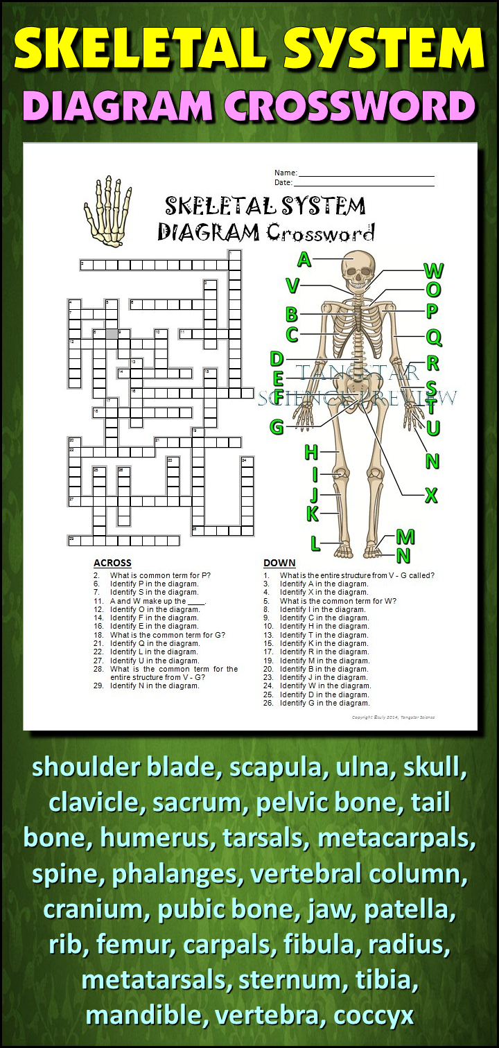 Skeletal System Crossword With Diagram {Editable} | Tpt Science - Skeletal System Crossword Puzzle Printables