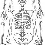 Skeleton Puzzle Printable   Print It   Human Skeleton, Human Body   Printable Skeleton Puzzle